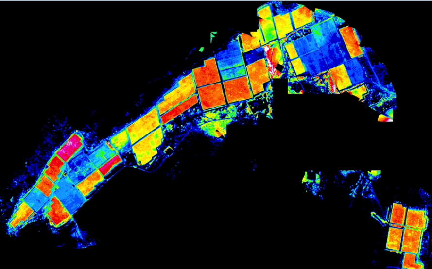 Imagem aerea da Labrunier em Petrolina, PE - Drones na viticultura