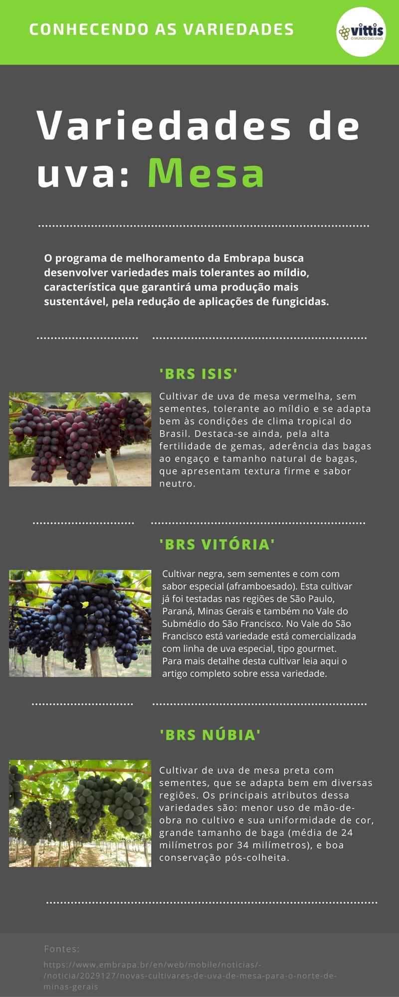 Variedades de uva Infografico - BRS Magna, BRS ISIS, BRS Vitória, uva, novas cultivares