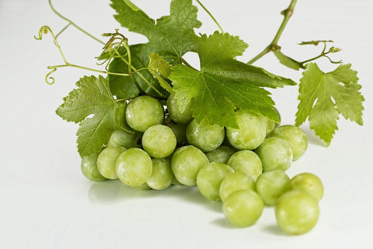Como aumentar o tamanho da baga da uva aplicando ácido giberélico