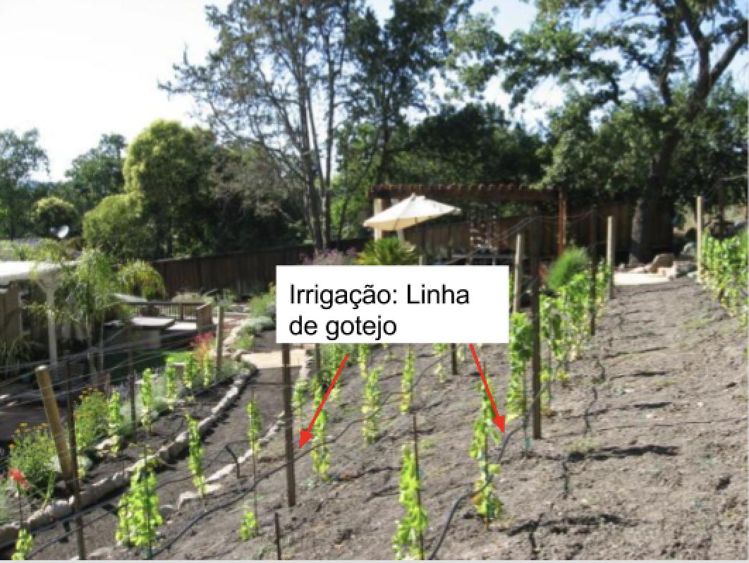 Imagem de Irrigação linha e gotejo