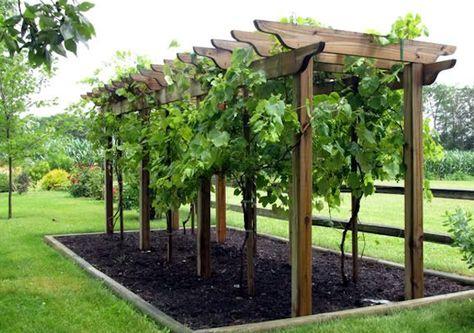 Pérgola utilizado em jardins ou quintais em áreas urbanas ou rurais.
