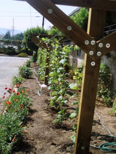 Sistema de Y utilizado em jardins ou quintais em áreas urbanas ou rurais.